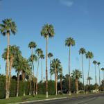 Палм-Спрингс (Palm Springs)