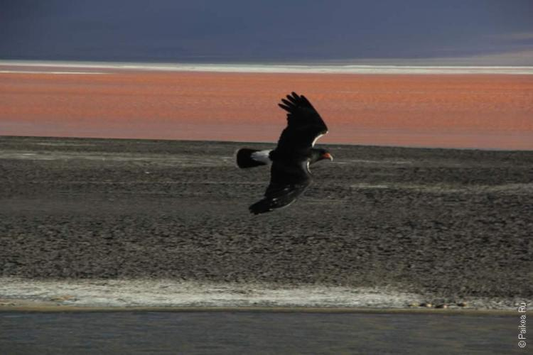 Боливия, Неземные краски