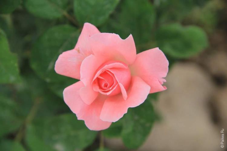 Красивые цветы на улицах Наски