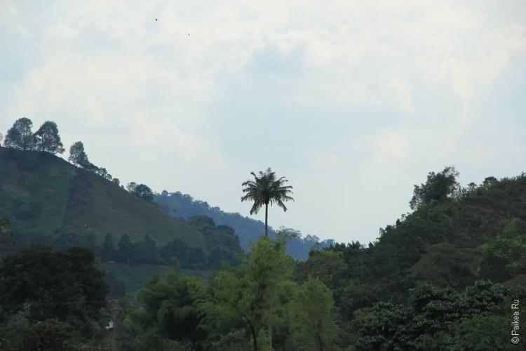 Водопад Санта-Рита, Саленто, Колумбия (Santa Rita waterfall, Salento, Colombia)