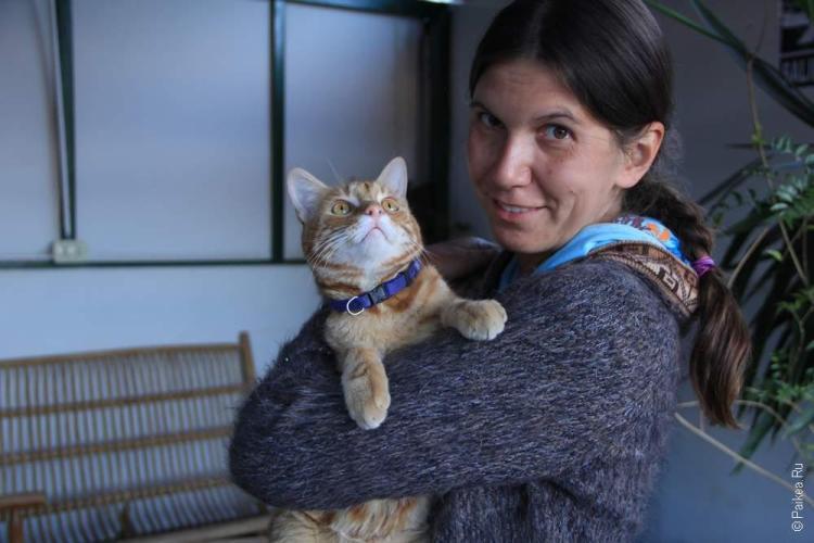 Кот из Укукуса, важный инка!