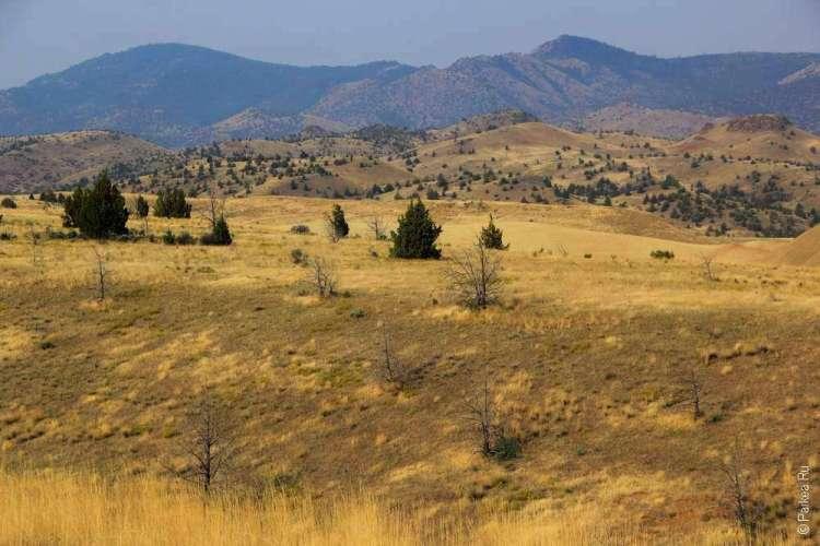 Желтый пейзаж в штате Орегон