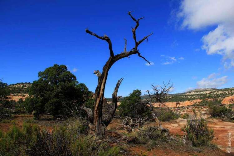 Живописная дорога Rim Rock Drive, Национальный памятник Колорадо, США 10