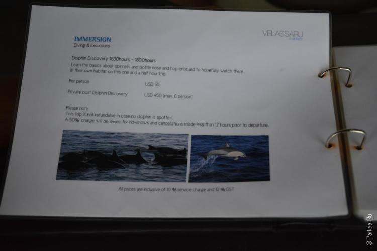 дельфины на мальдивах экскурсия