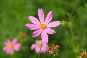 Цветы в Мэ Ау Северный Таиланд