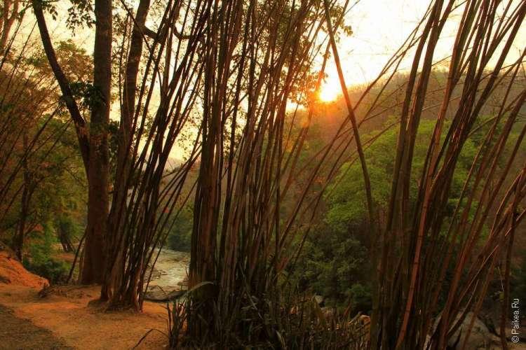 Бамбуковая роща Об Луанг