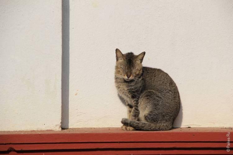 сипо кот