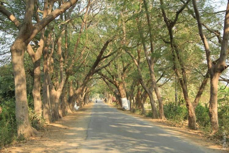 Ава деревья и дорога