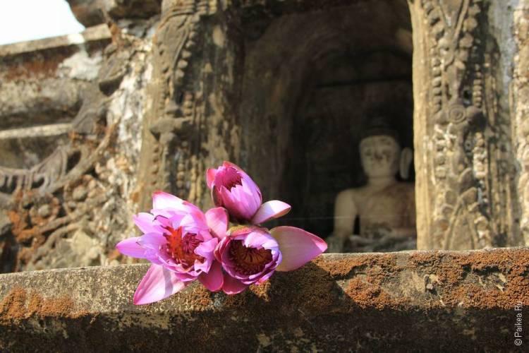 Будда и лотосы