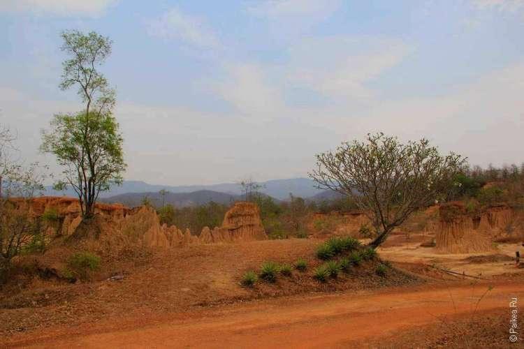 Деревья в Сао Дин