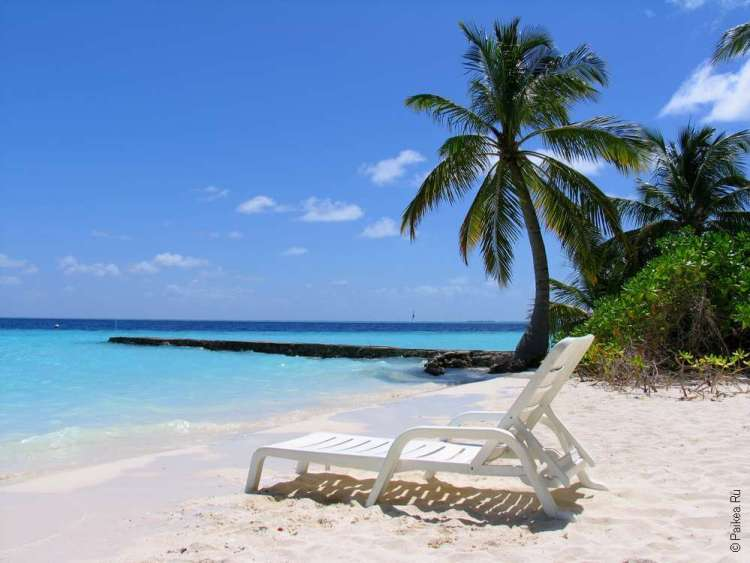 Пляжный отдых на Мальдивах под пальмой