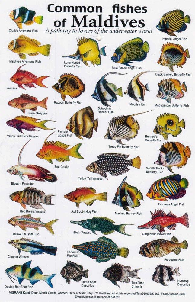Рыбы на Мальдивах