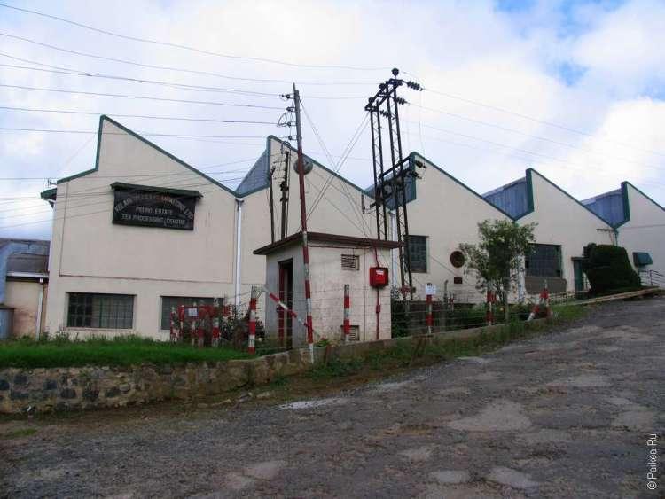 Фабрика цейлонского чая Шри Ланка
