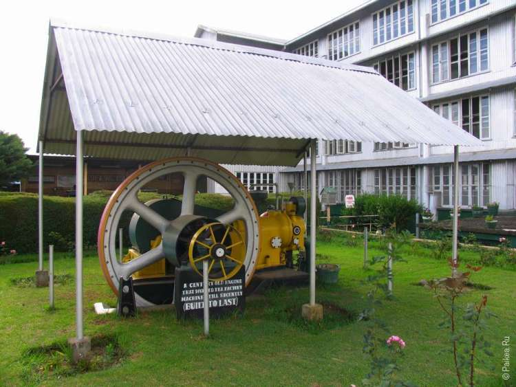 Фабрика чая Шри-Ланка