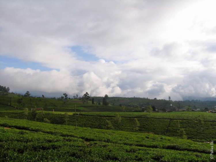 Шри-Ланка - плантации цейлонского чая в Нувара Элии