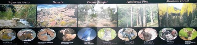 Гранд-Каньон, животные и растения