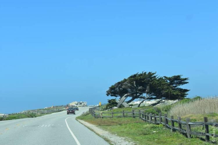 17-мильная дорога кипарисы