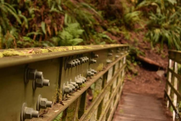 парк редвуд мост
