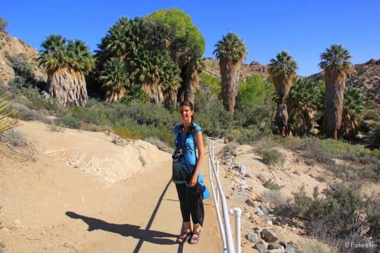 Калифорнийские пальмы в парке Джошуа Три