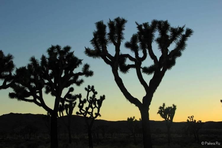 Кэп Рок, Национальный парк Джошуа Три, Калифорния, США