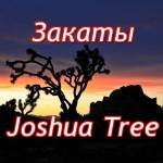 Джошуа три (Joshua tree)
