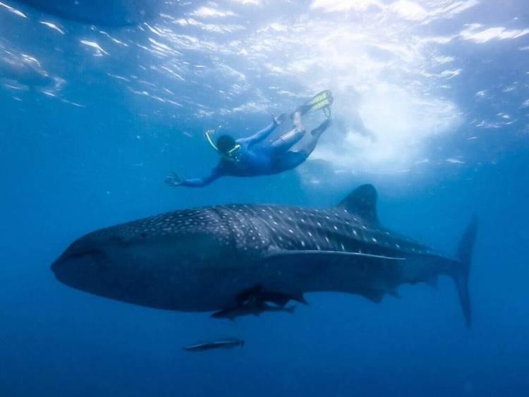 Мальдивы домашний риф снорклинг