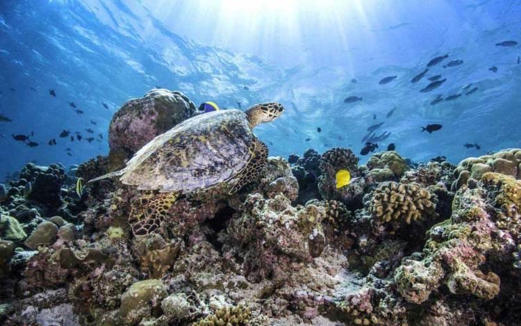 Коралловые рифы на Мальдивах