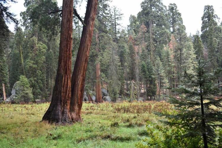трейл в парке секвойя, калифорния, сша