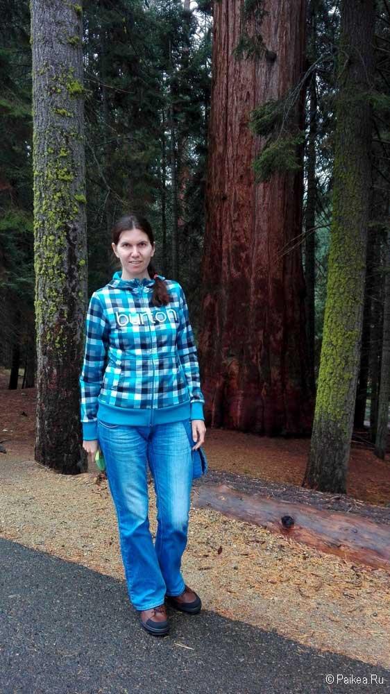 прогулка в парке секвойя, калифорния, сша