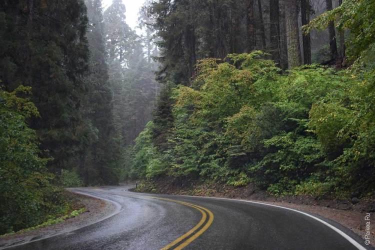 правила посещения национальных парков сша ограничения covid / дорога в парке секвойя