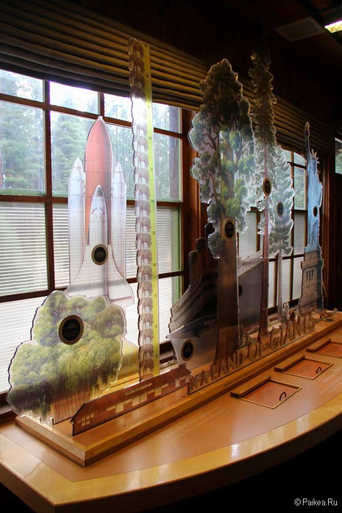 секвойя музей