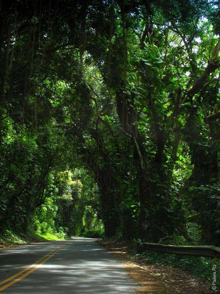 Красивая дорога на Гавайях