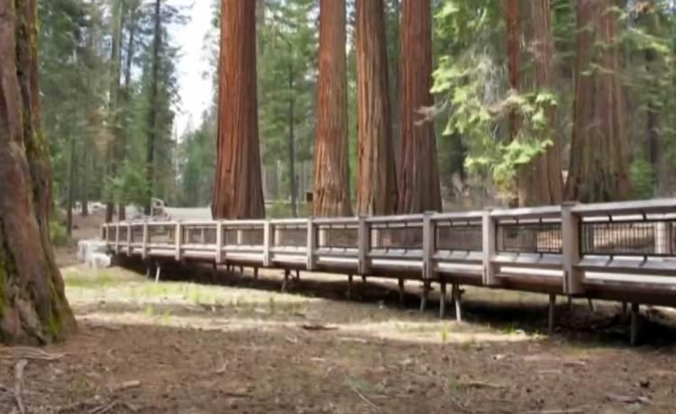 трейл в парке йосемити
