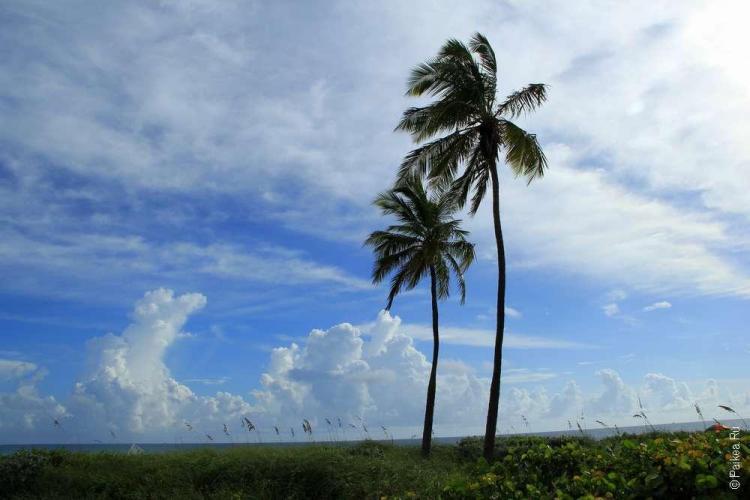 Отдых во Флориде - наш лучший маршрут по пляжам Флориды 14