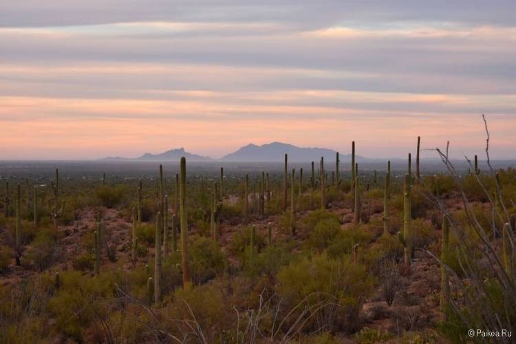 Сагуаро парк (Saguaro National Park) 05