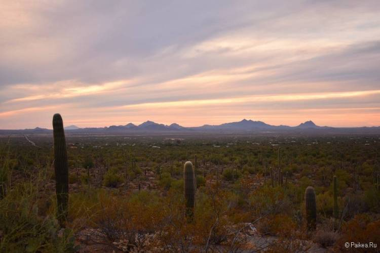Сагуаро парк (Saguaro National Park) 06
