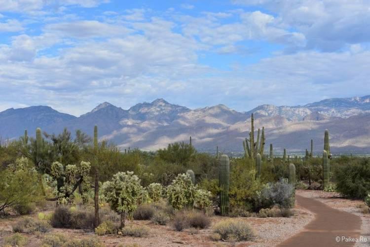 Сагуаро парк (Saguaro National Park) 19