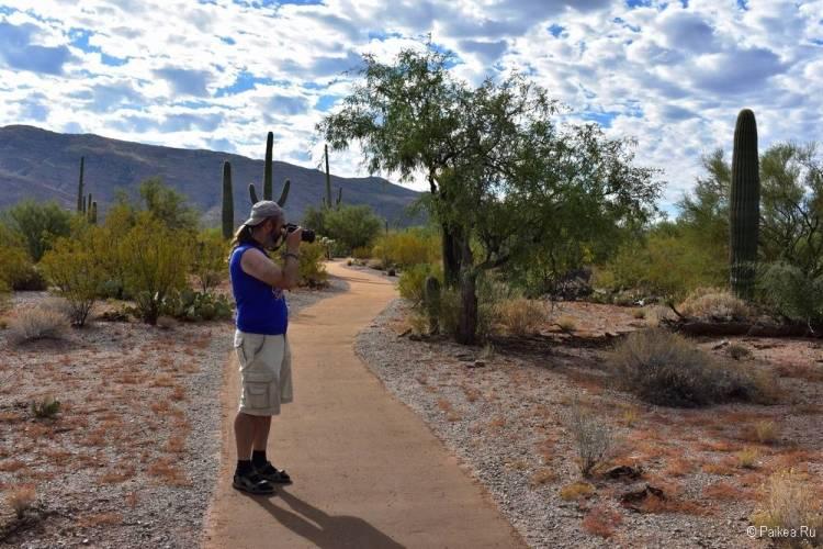 Сагуаро парк (Saguaro National Park) 20
