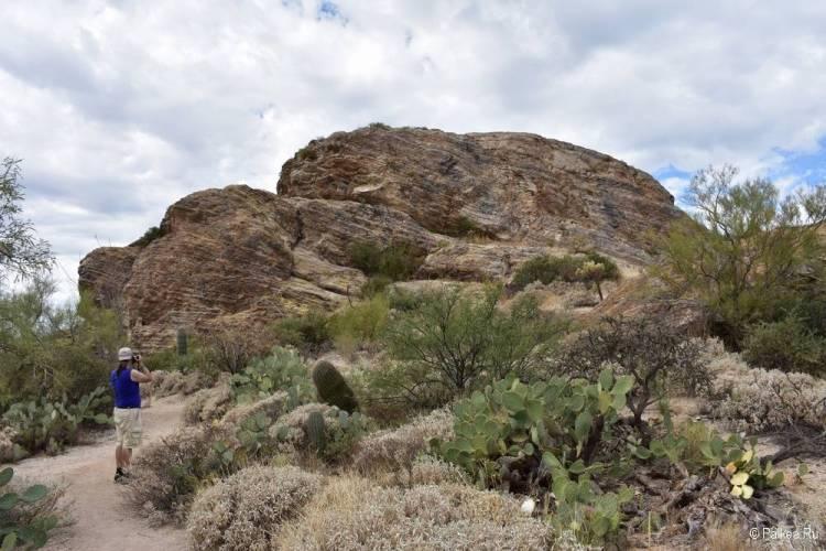Сагуаро парк (Saguaro National Park) 22