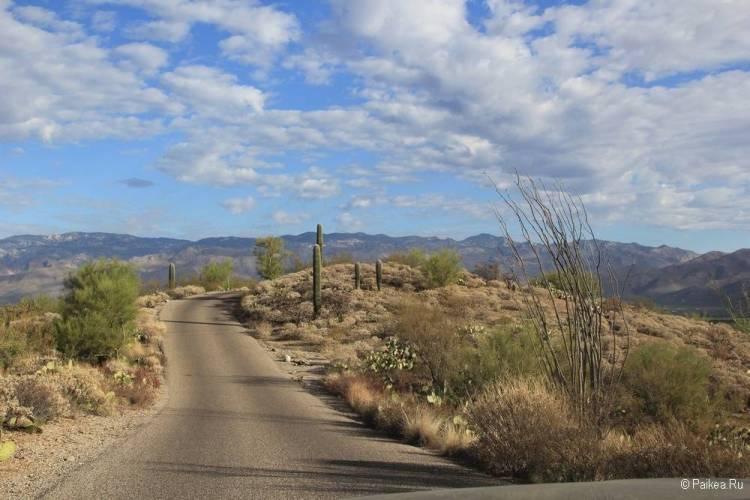 Сагуаро парк (Saguaro National Park) 33