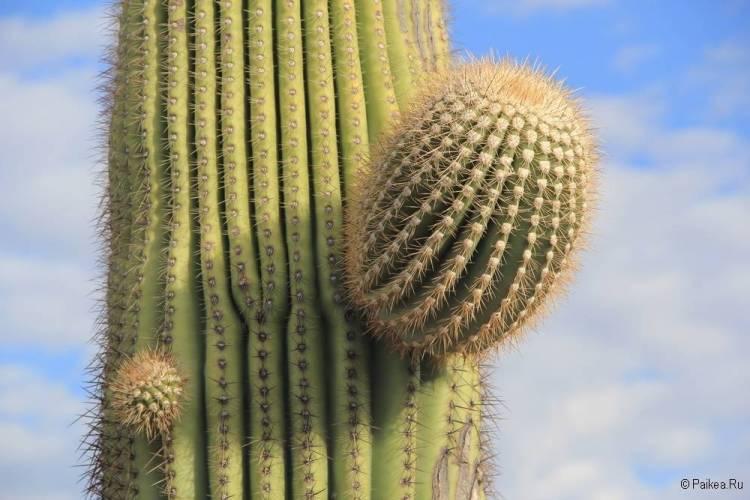 Сагуаро парк (Saguaro National Park) 34