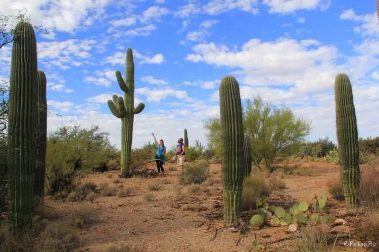 Сагуаро парк (Saguaro National Park) 40