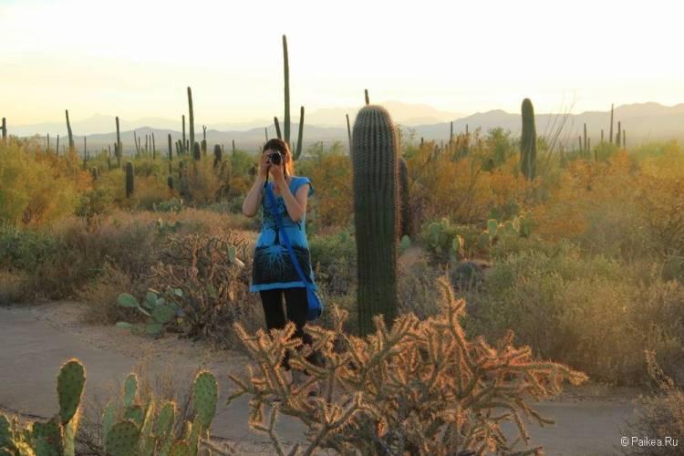 Сагуаро парк (Saguaro National Park) 42