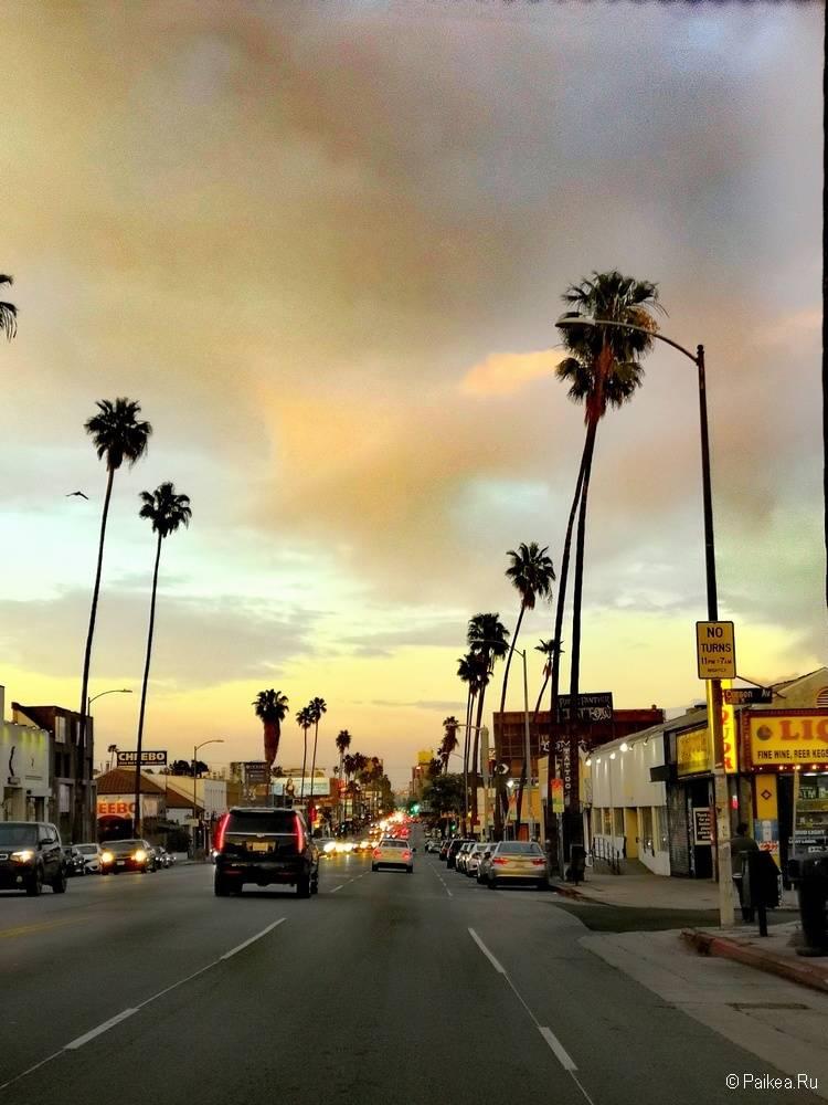 Поездка в Лос-Анджелес самостоятельно пальмы фото
