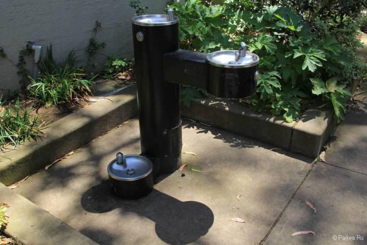 Питьевой фонтанчик для взрослых, детей и домашних питомцев