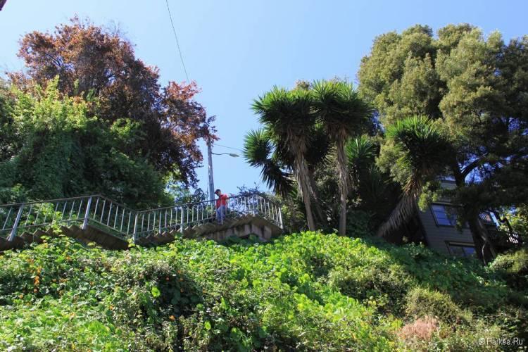 Улица со ступеньками Гринвич-Степс в Сан-Франциско 24