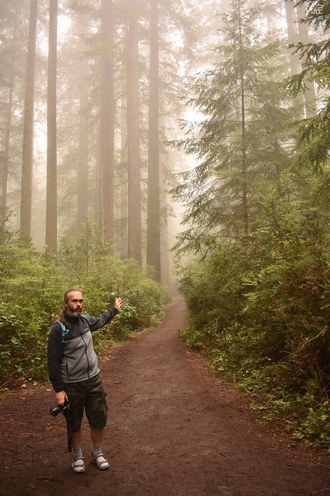 туманный лес северная калифорния