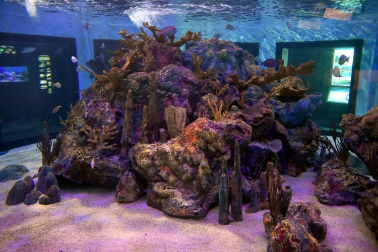 парк джон пеннекамп корал риф / john pennekamp coral reef state park 17
