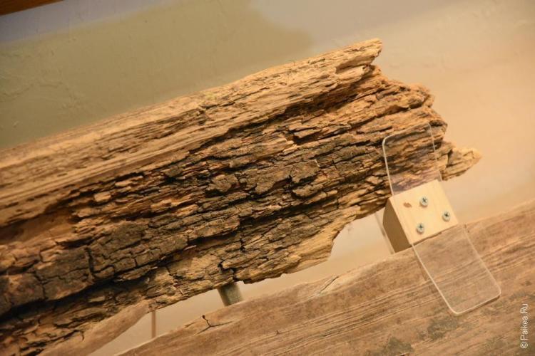 биг сайпресс (big cypress) 68