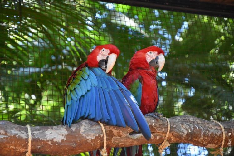 парк птиц фос-ду-игуасу бразилия / parque das aves 20
